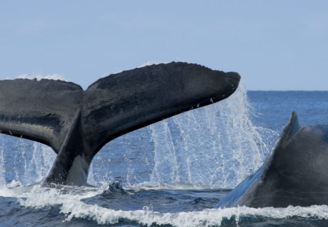 Whale Watching In Oregon – There's Nothing Quite Like It!